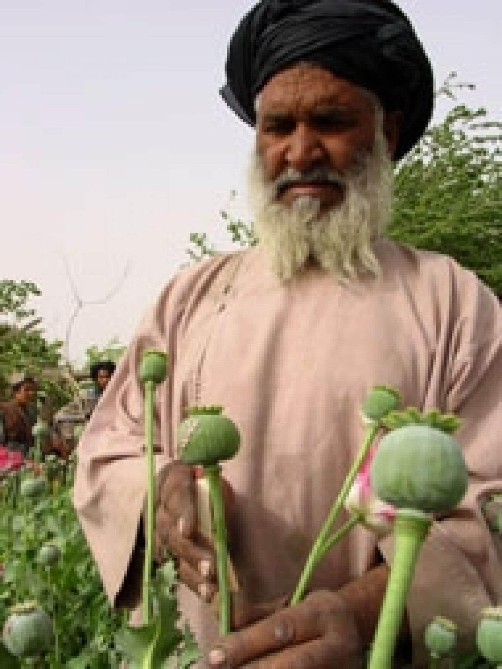 La récolte de 2004