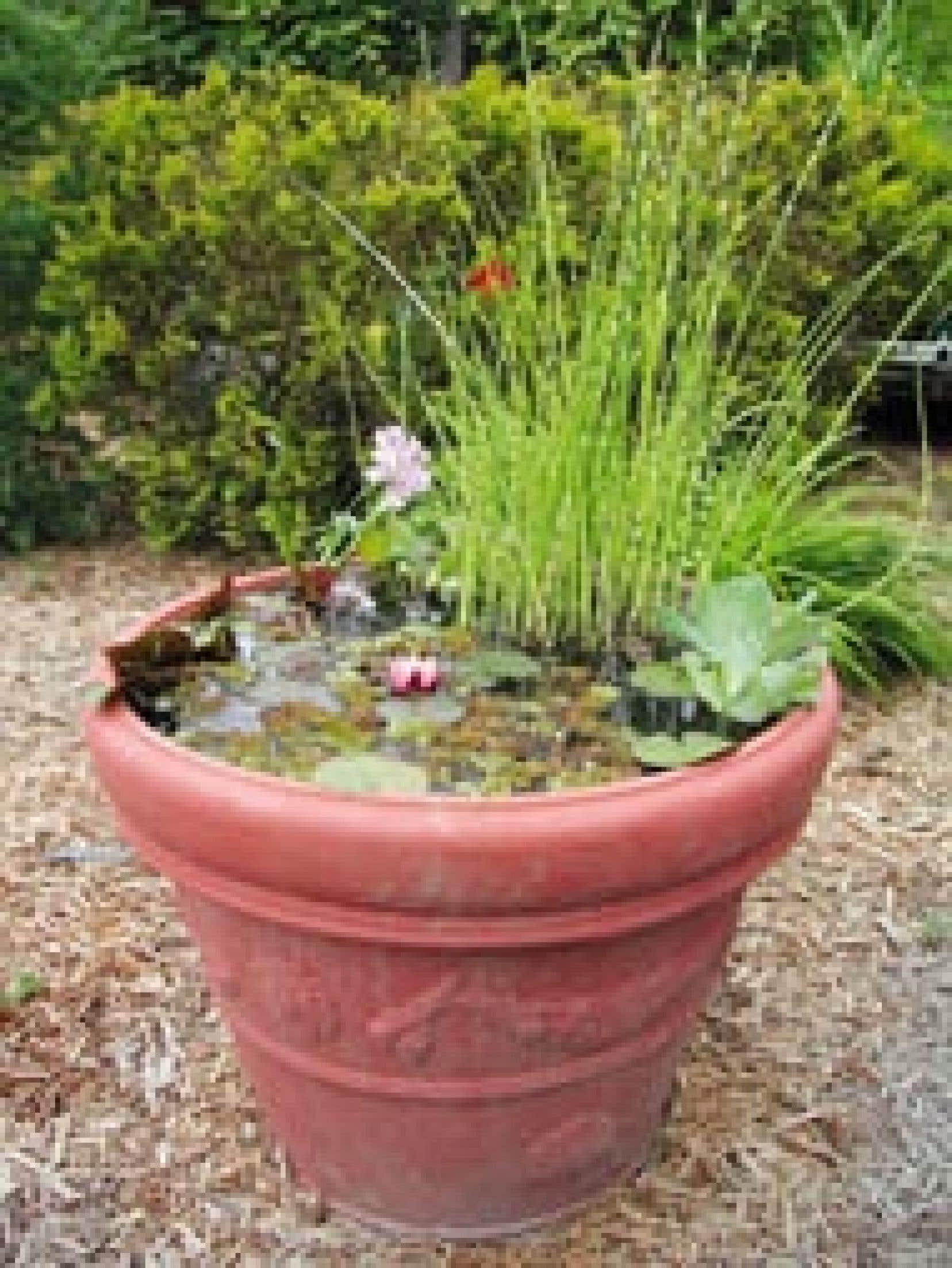 Jardins: De la vasque au mascaron   Le Devoir