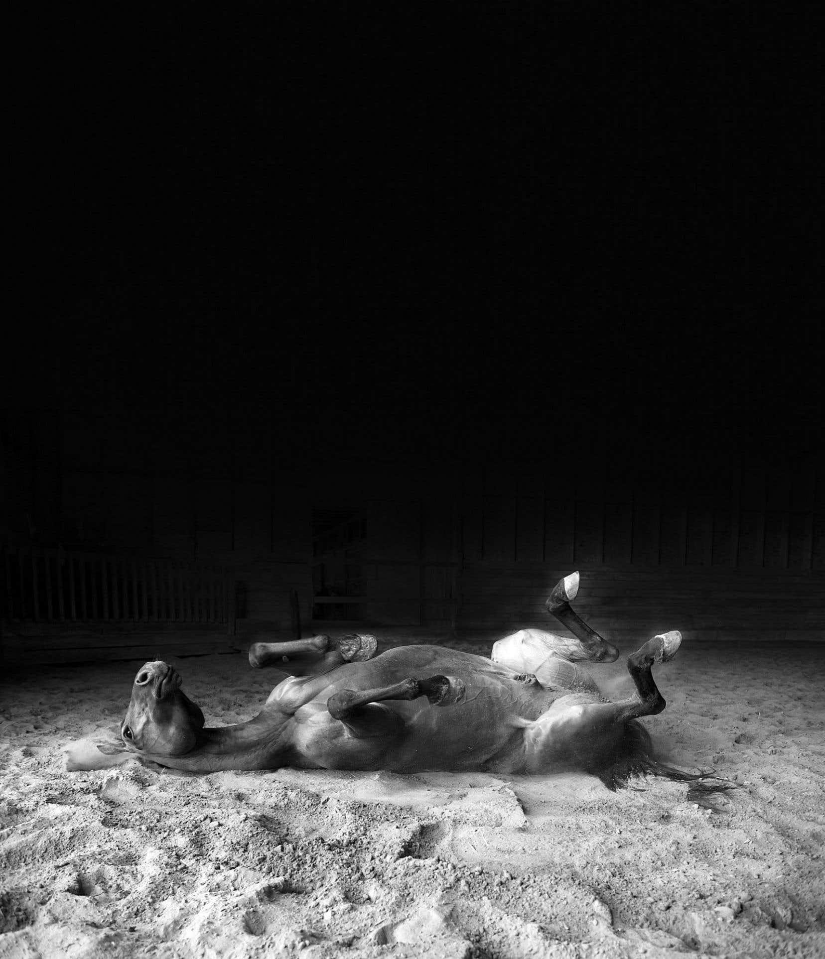 Éliane Excoffier, «Fables (Mr Great, coup de lance)», 2015