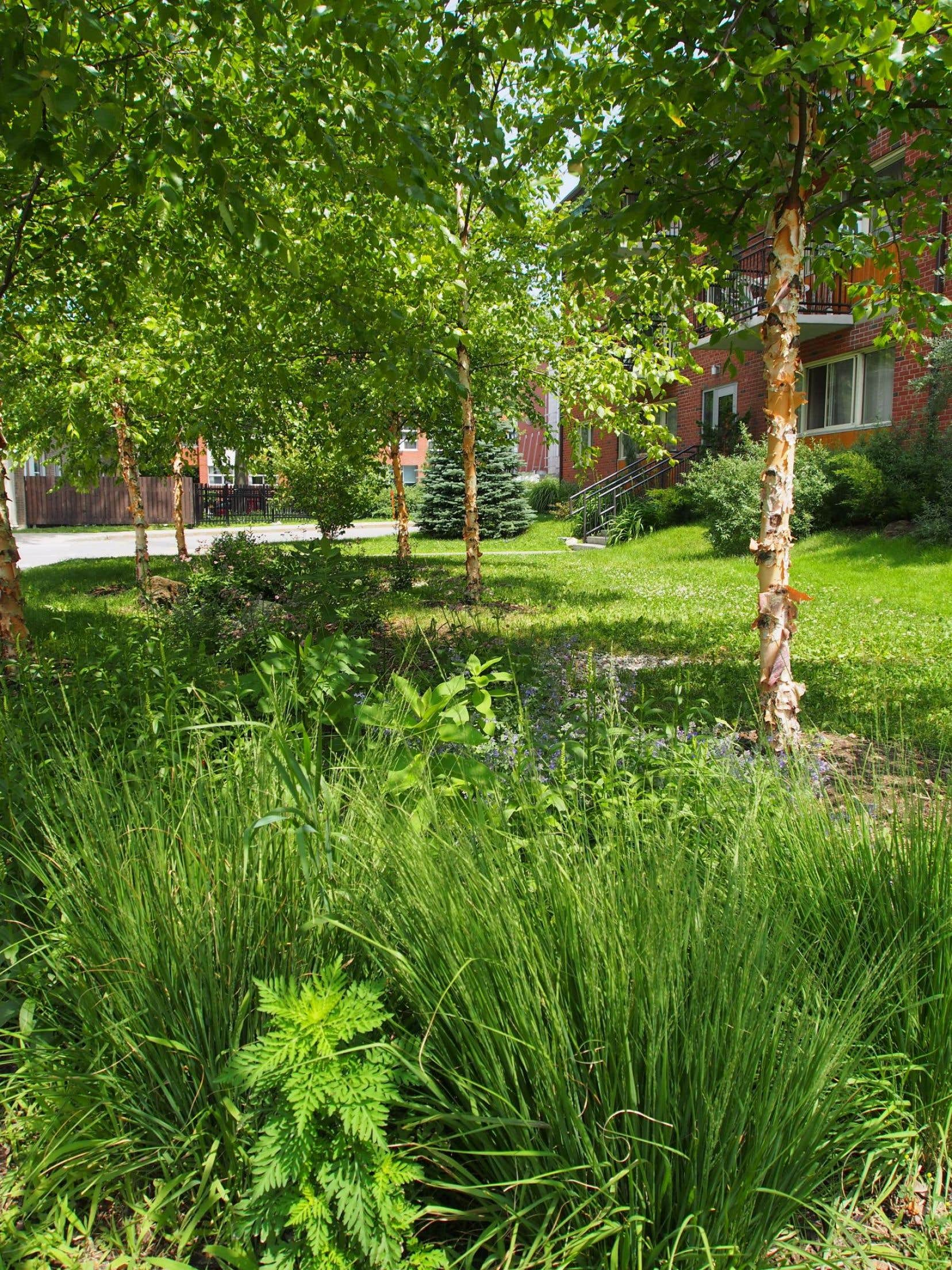 Un jardin de pluie s'intègre sur une lègère dépression ou sur une cuvette qu'on creuse. Cela permet un meilleur écoulement des eaux, comme ici, le jardin de pluie des Habitations Jeanne-Mance, à Montréal, qui recueille l'eau du stationnement.