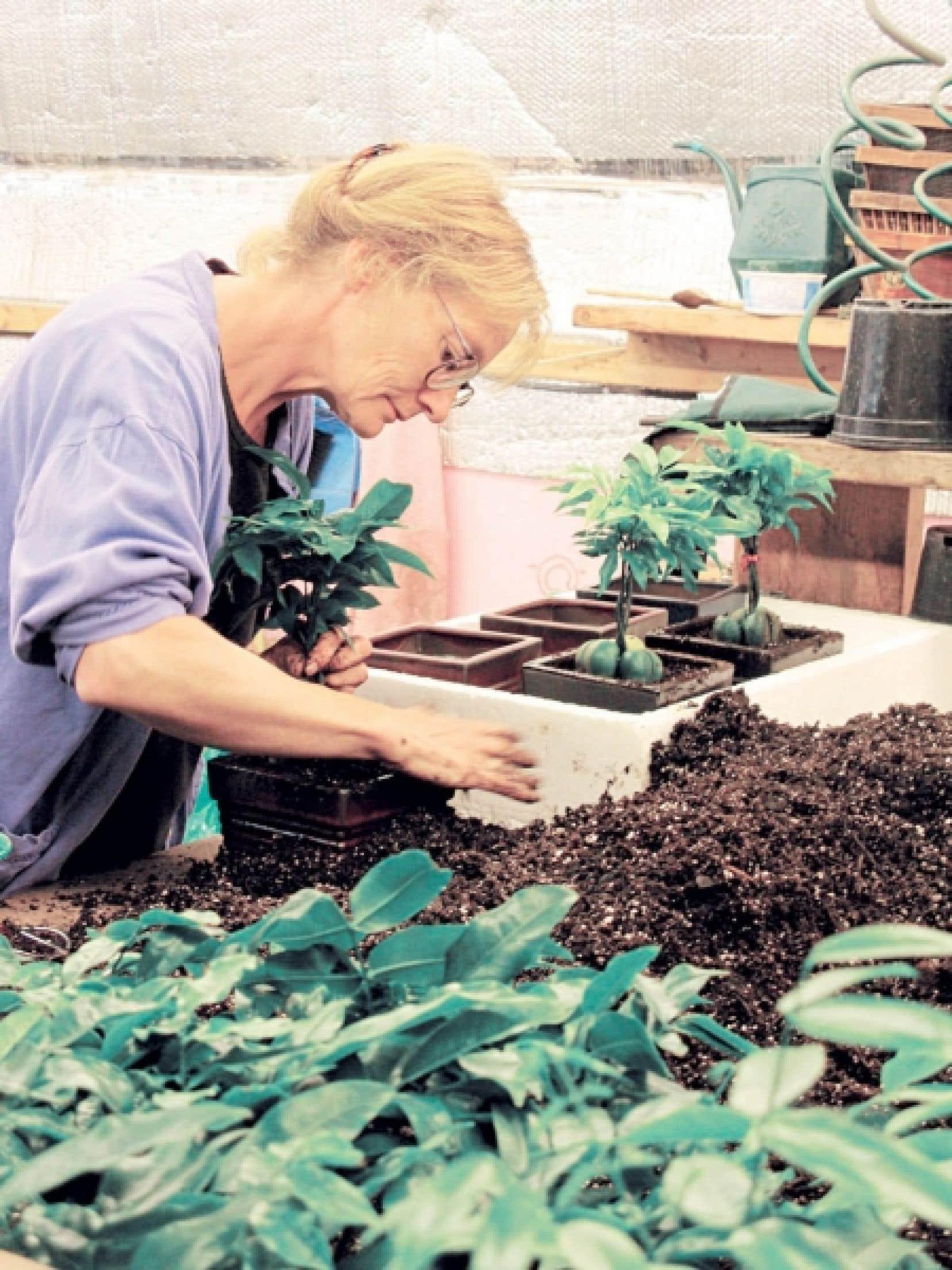 Il y a 25 ans, la production se limitait à 5000 petits arbres à pot. Aujourd'hui, elle s'élève à 60 000 bonsais et 400 000 bambous