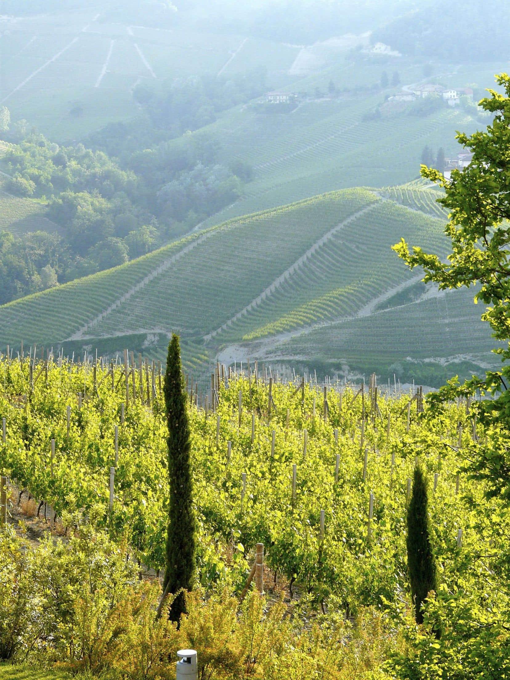 Du côté de Serralunga d'Alba, dans le Piémont