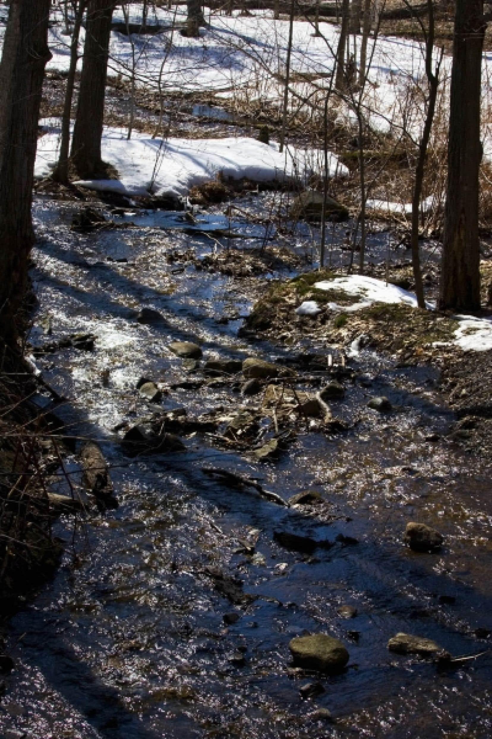 Les «surplus» d'eau sont un mythe, tout comme le fait qu'ils sont «inutilisés», puisque les caractéristiques des écosystèmes en dépendent.