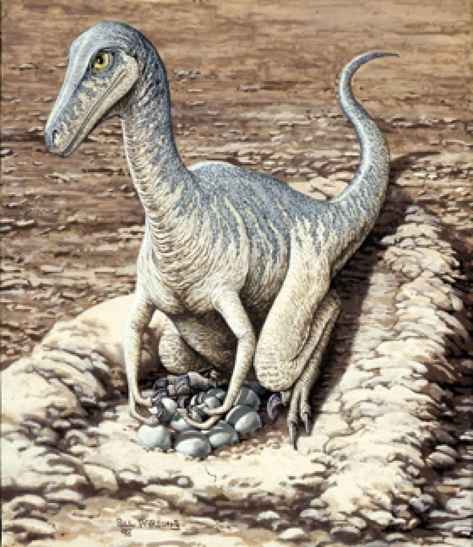 Un dessin d'un Troodon, une espèce proche des ancêtres des oiseaux
