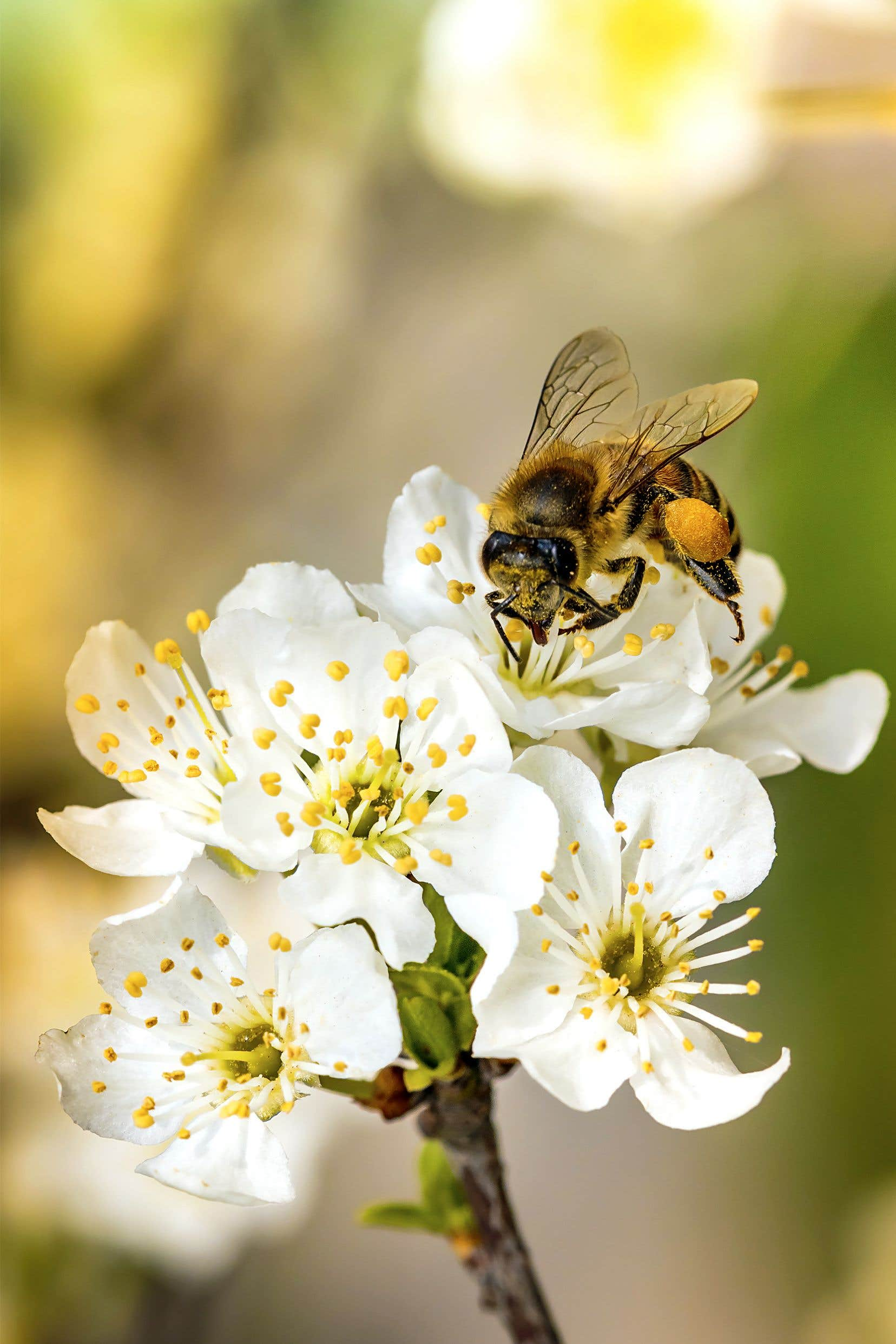 Le président du conseil d'administration du CEROM, Christian Overbeek, a déjà pris publiquement position en faveur de l'utilisation des néonicotinoïdes, des pesticides «tueurs d'abeilles».