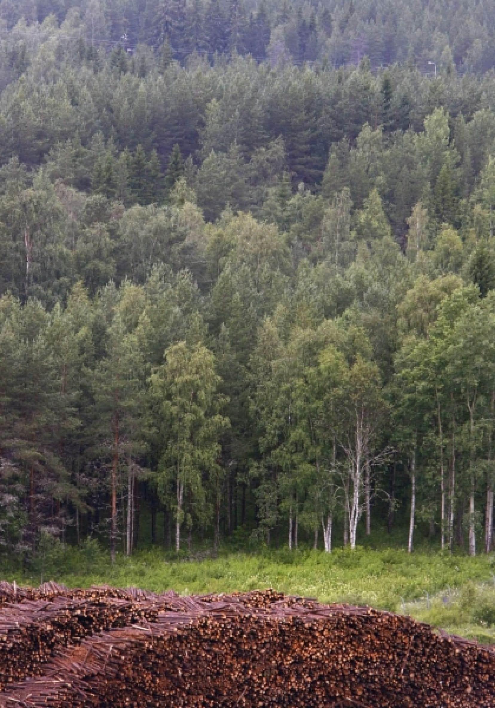 Au Qu&eacute;bec, on n&rsquo;int&egrave;gre pas encore aux plans de coupe foresti&egrave;re les calculs qui optimiseraient la r&eacute;tention d&rsquo;eau afin de pr&eacute;venir les p&eacute;nuries estivales.<br />