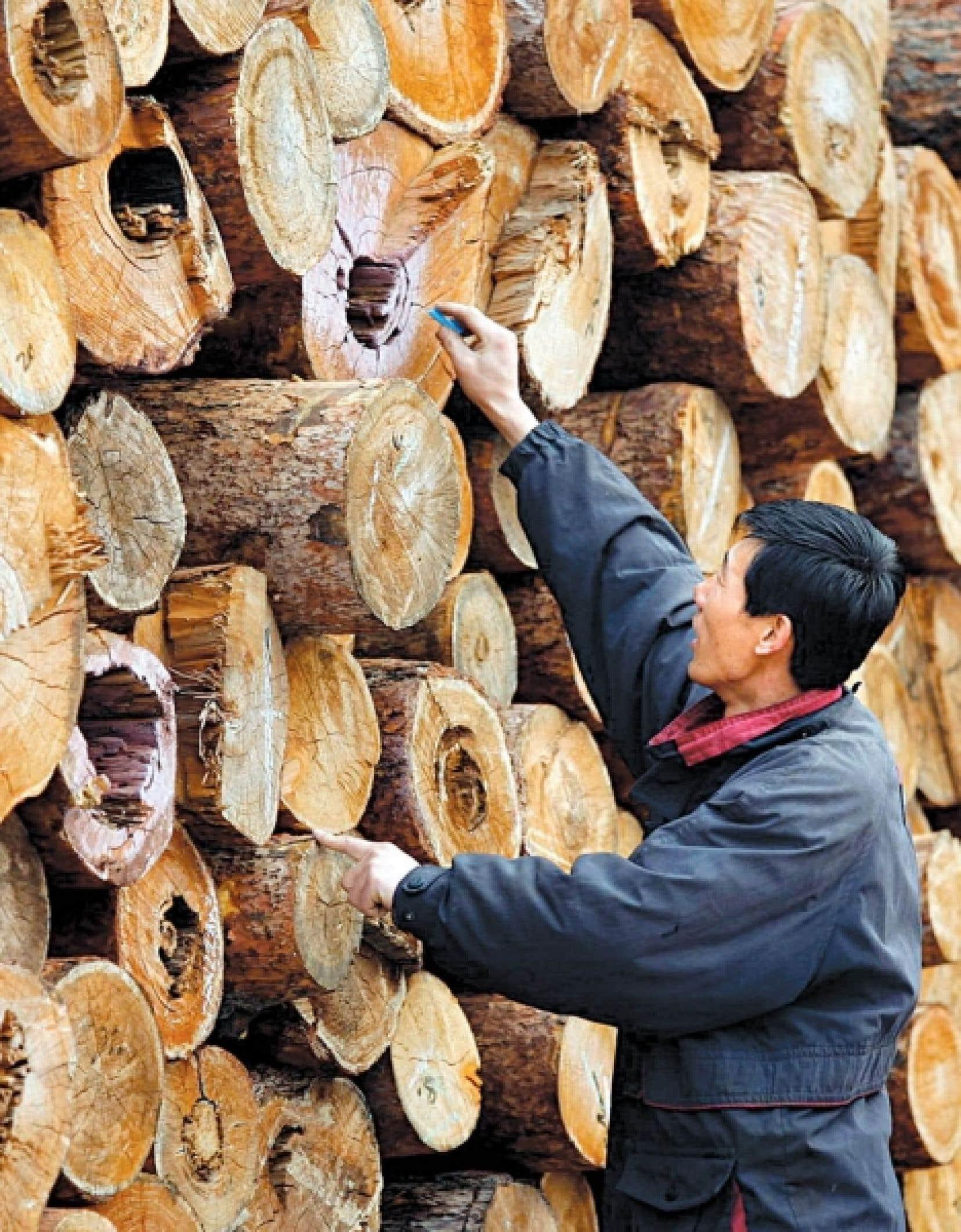 Un travailleur forestier chinois marque le bois qui a été coupé.<br />