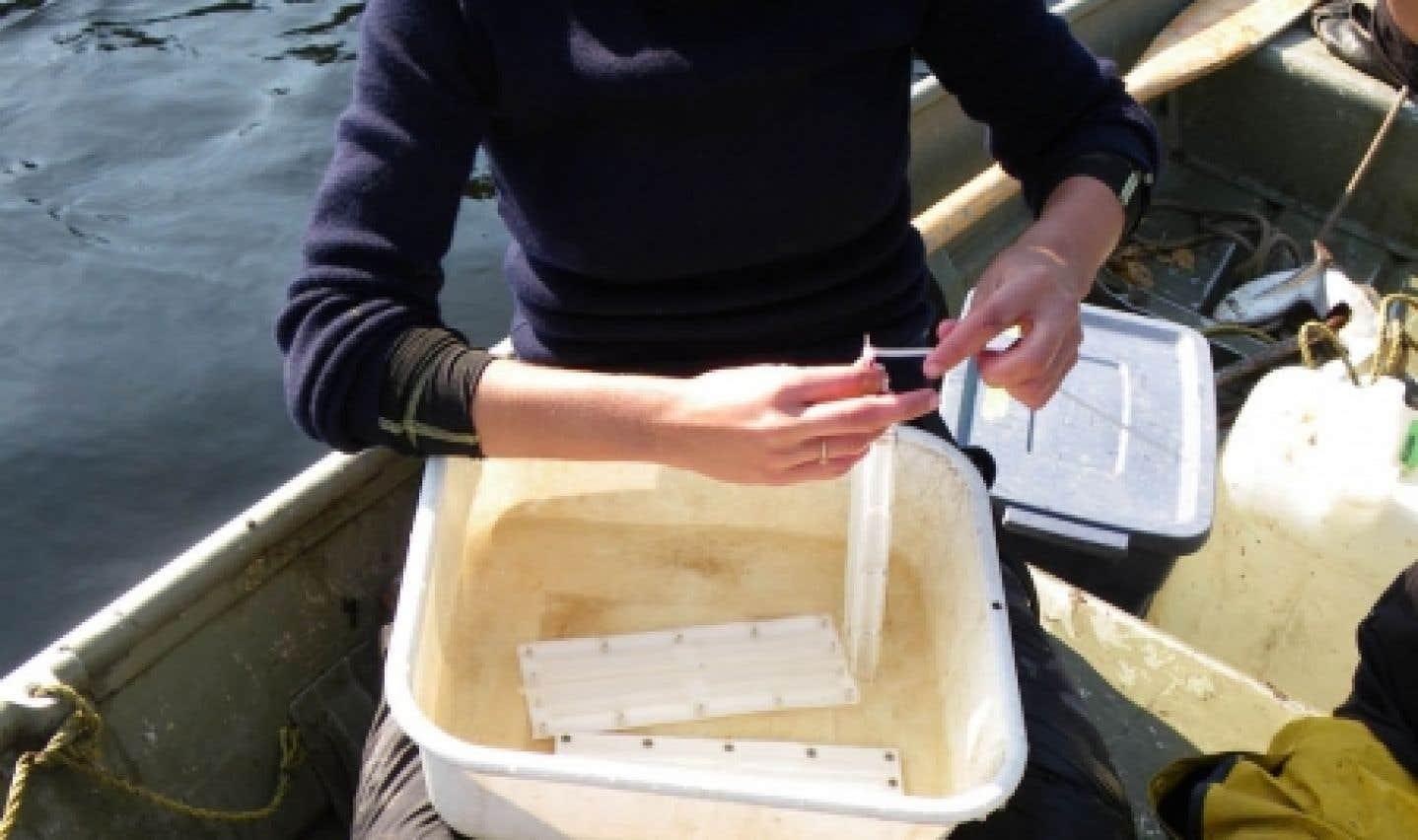 Isabelle Proulx, étudiante au doctorat en sciences de l'eau à l'INRS