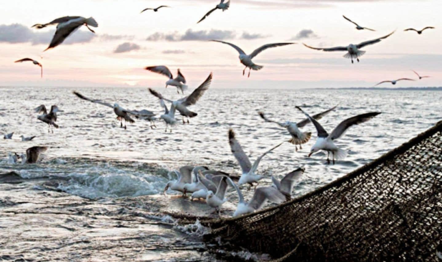 Des goélands bataillent au-dessus du filet d'un chalutier pêchant dans l'Atlantique. Après la surpêche, la pollution serait le deuxième facteur de «mise en danger» des ressources halieutiques.