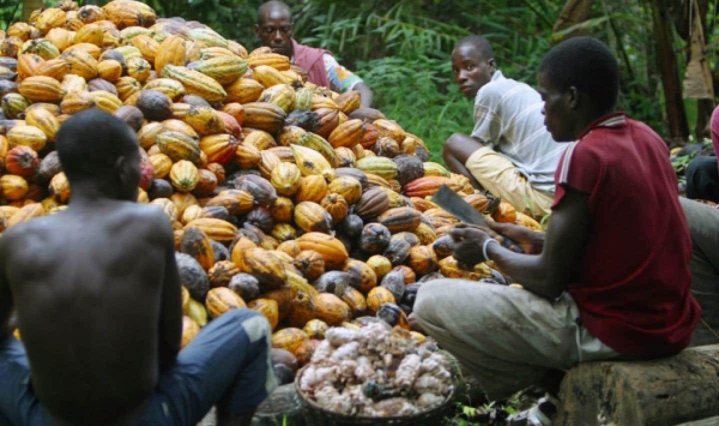 Culture du cacao en Côte d'Ivoire