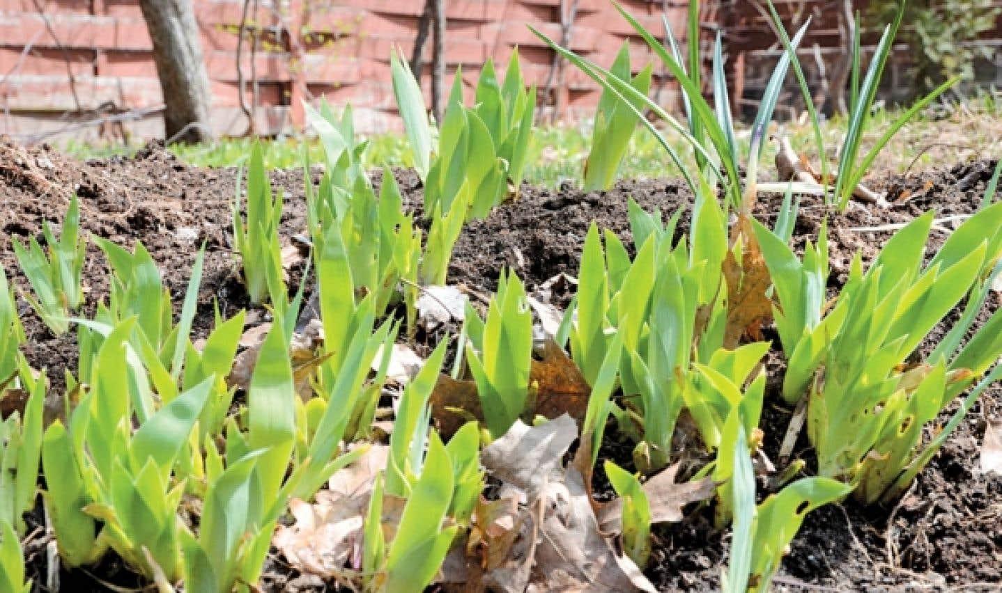 Le printemps est là! Les rayons du soleil et les températures clémentes qui chatouillent les jeunes pousses suffisent pour que les apprentis jardiniers ressortent leur matériel du garage.