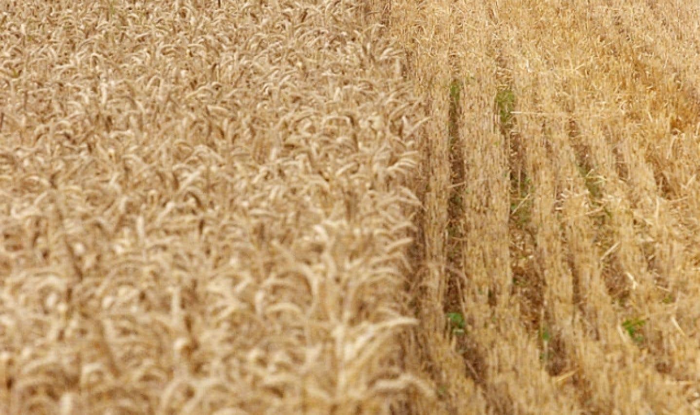 En France, 20 % des agriculteurs ont amorcé la transition de l'agriculture productiviste vers une agriculture écologiquement intensive.