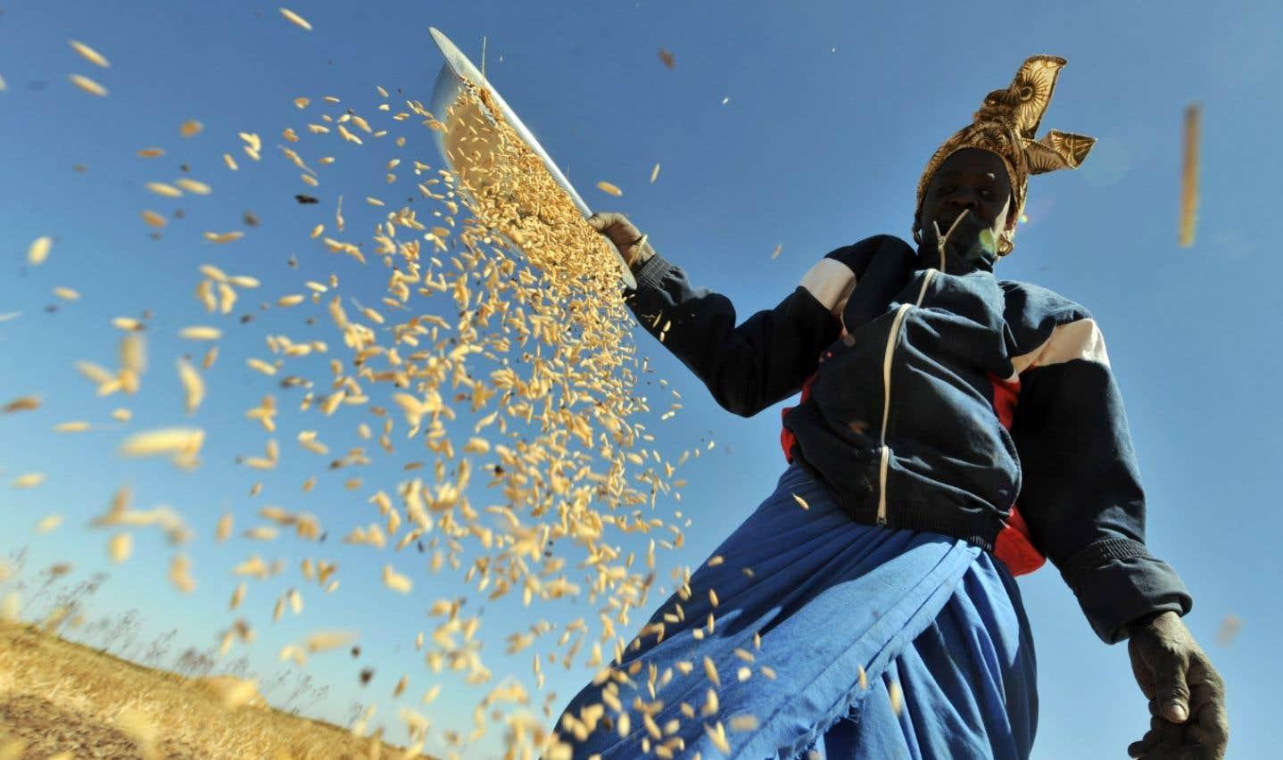 Environ 70 % de la population du Sénégal vit de l'agriculture.