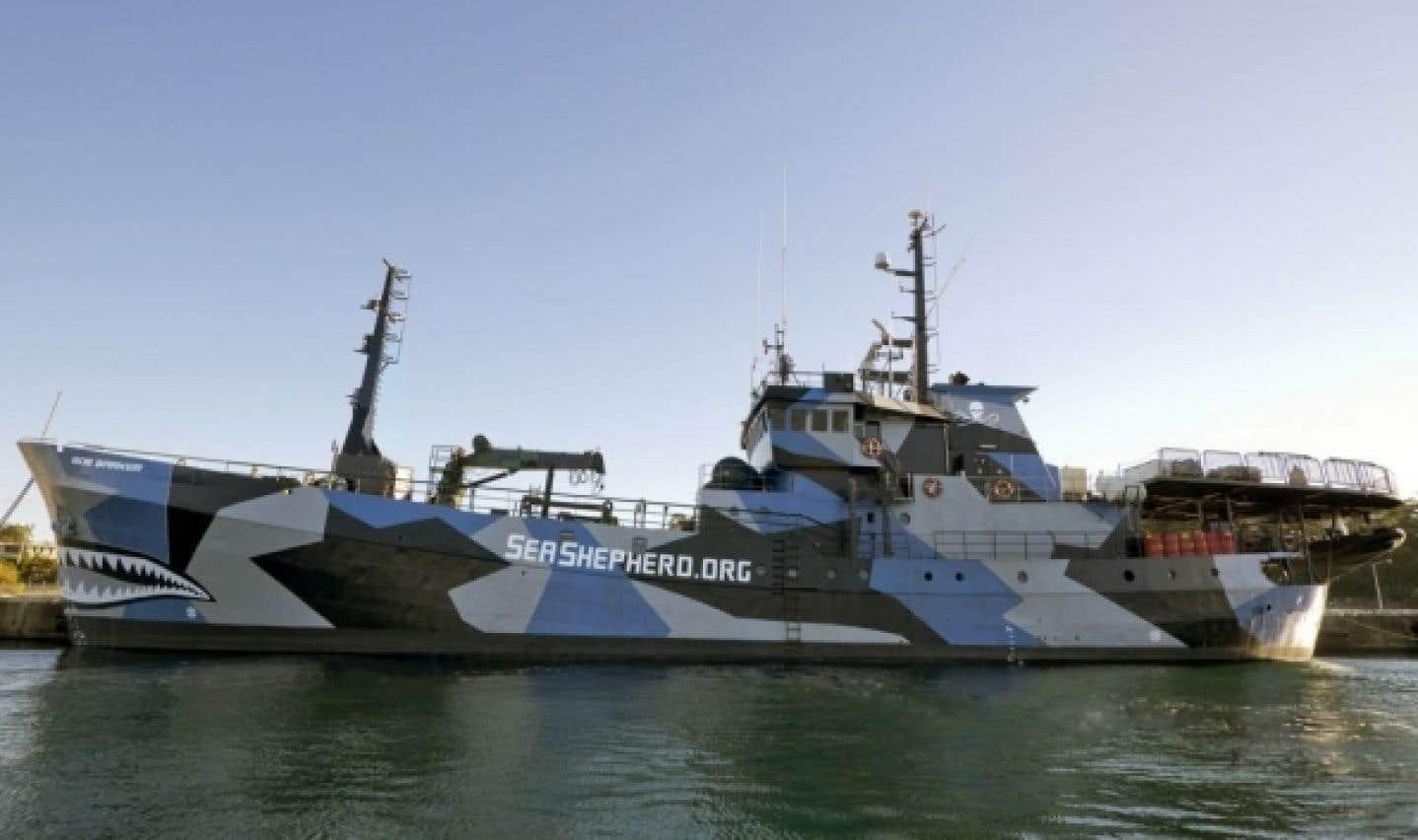 Affrontements violents entre baleiniers et animalistes dans l'océan Austral
