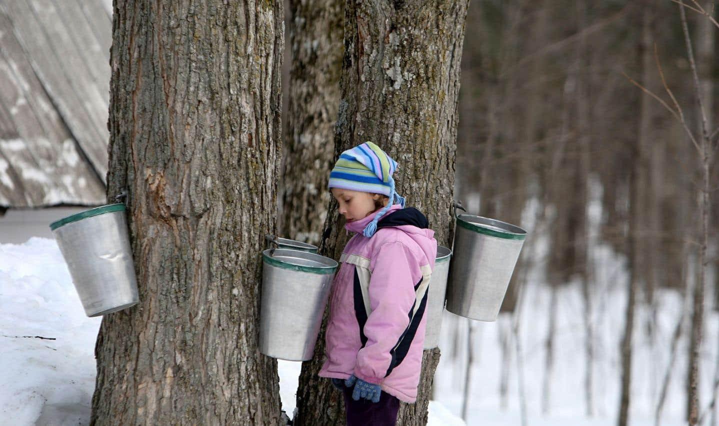 Le temps des sucres crée une magie propre au Québec, qui possède 85% de la production mondiale de sirop d'érable.