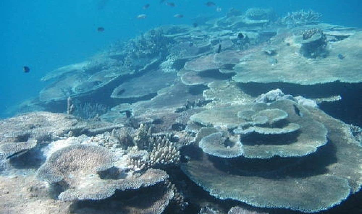 Grande Barrière de corail: l'UNESCO sonne l'alarme