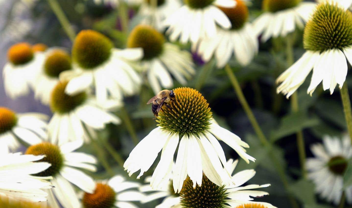 Les plantes ont la capacité de se «reconnaître» les unes des autres grâce à leurs sécrétions chimiques spécifiques, nous enseigne la science. Chaque système racinaire tente d'occuper le meilleur espace.