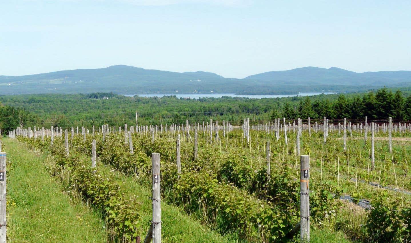 Vue sur le domaine Les Brome du vigneron Léon Courville, à Lac-Brome