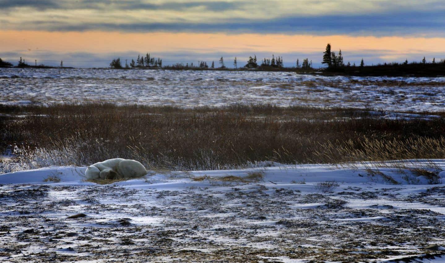 La verte métamorphose de la toundra arctique