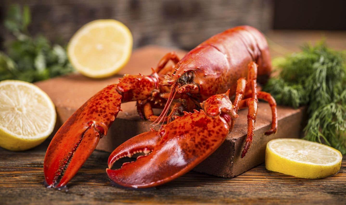 Le homard du Québec