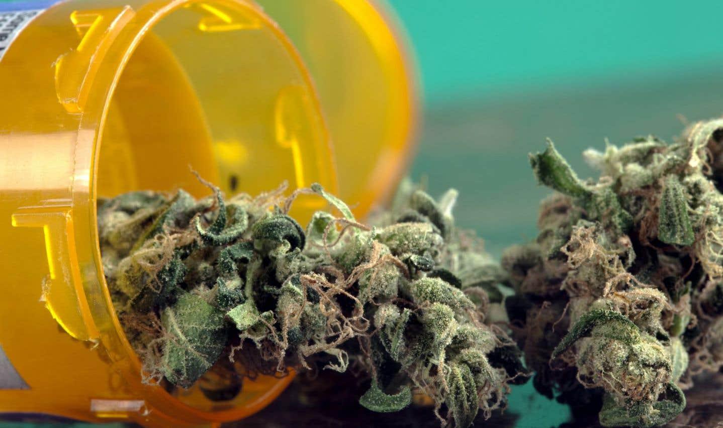 L'usage du cannabis pourrait contribuer à réduire les surdoses d'opioïdes