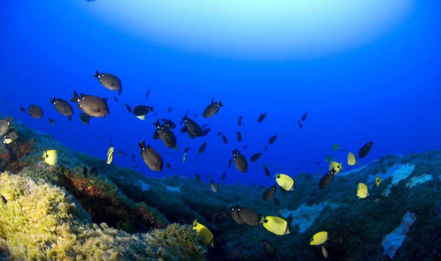 Les océans malades du réchauffement