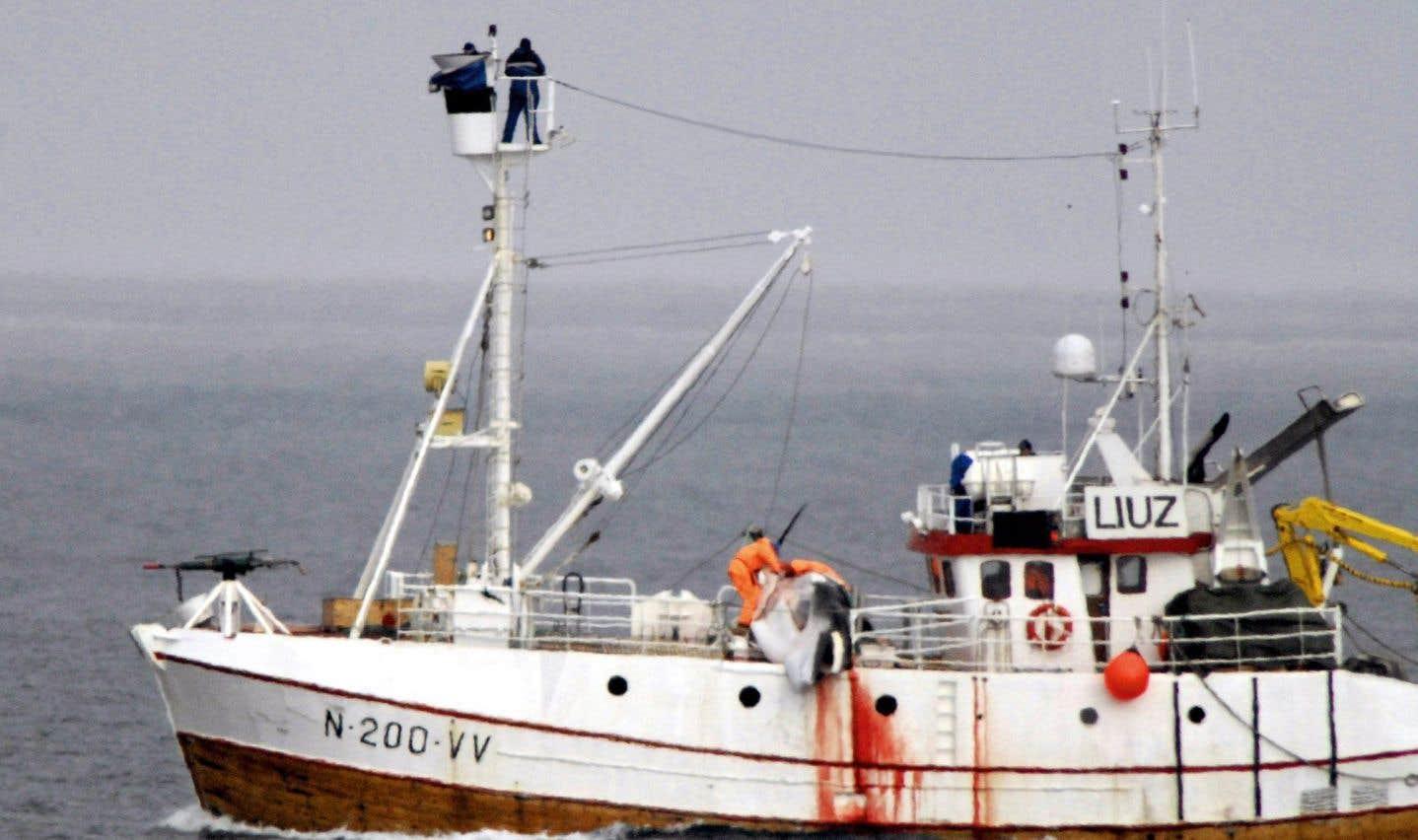 Les baleiniers japonais atteignent leurs objectifs: 333 petits rorquals tués