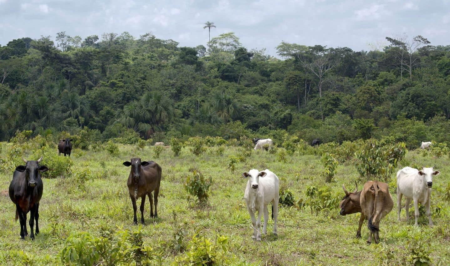 Au Brésil, la forêt fait les frais du virage politique