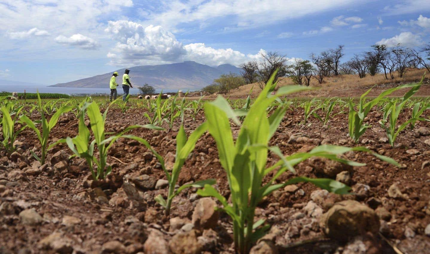 Une autre défaite pour l'étiquetage obligatoire des OGM