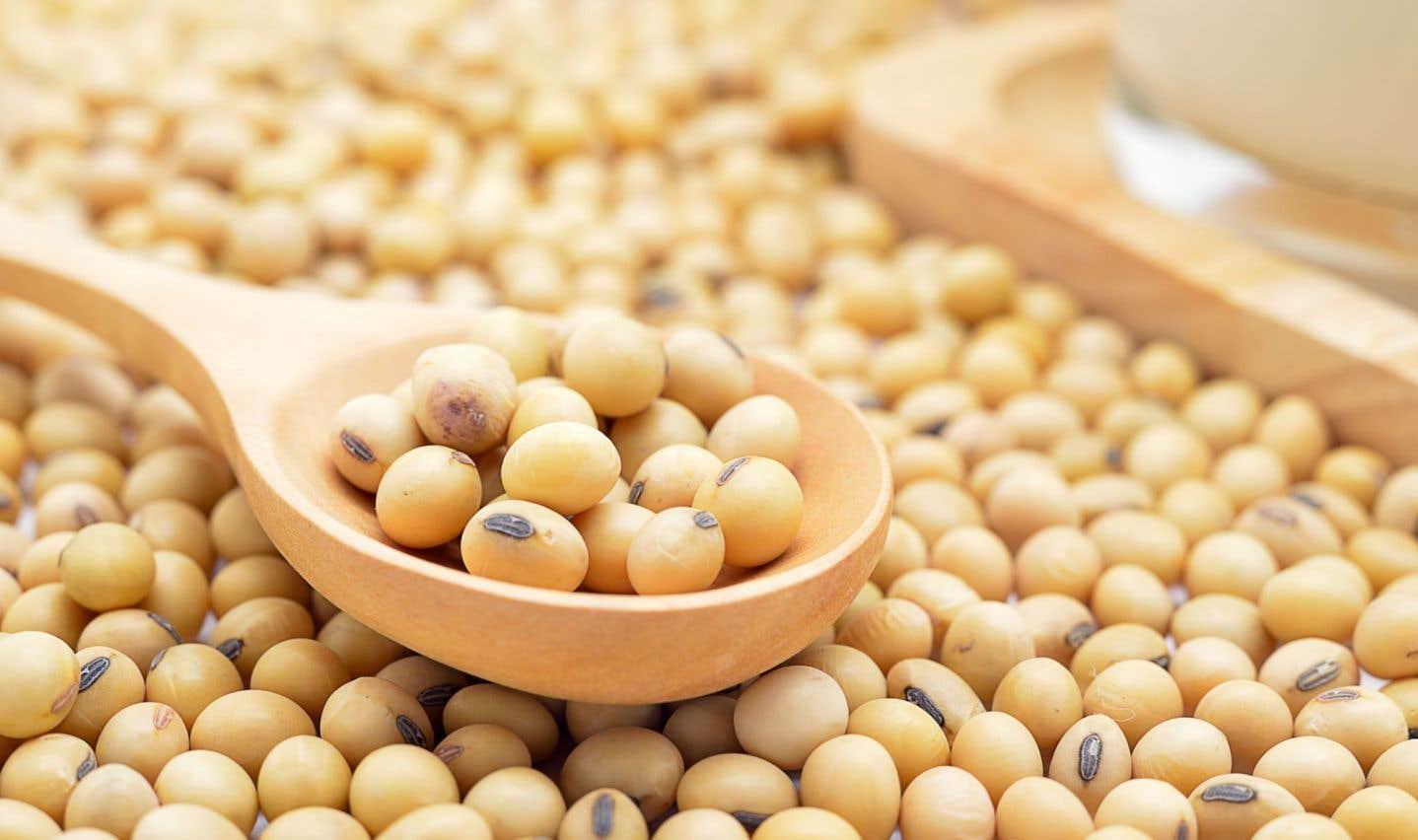 Réduire l'allergénicité des légumineuses