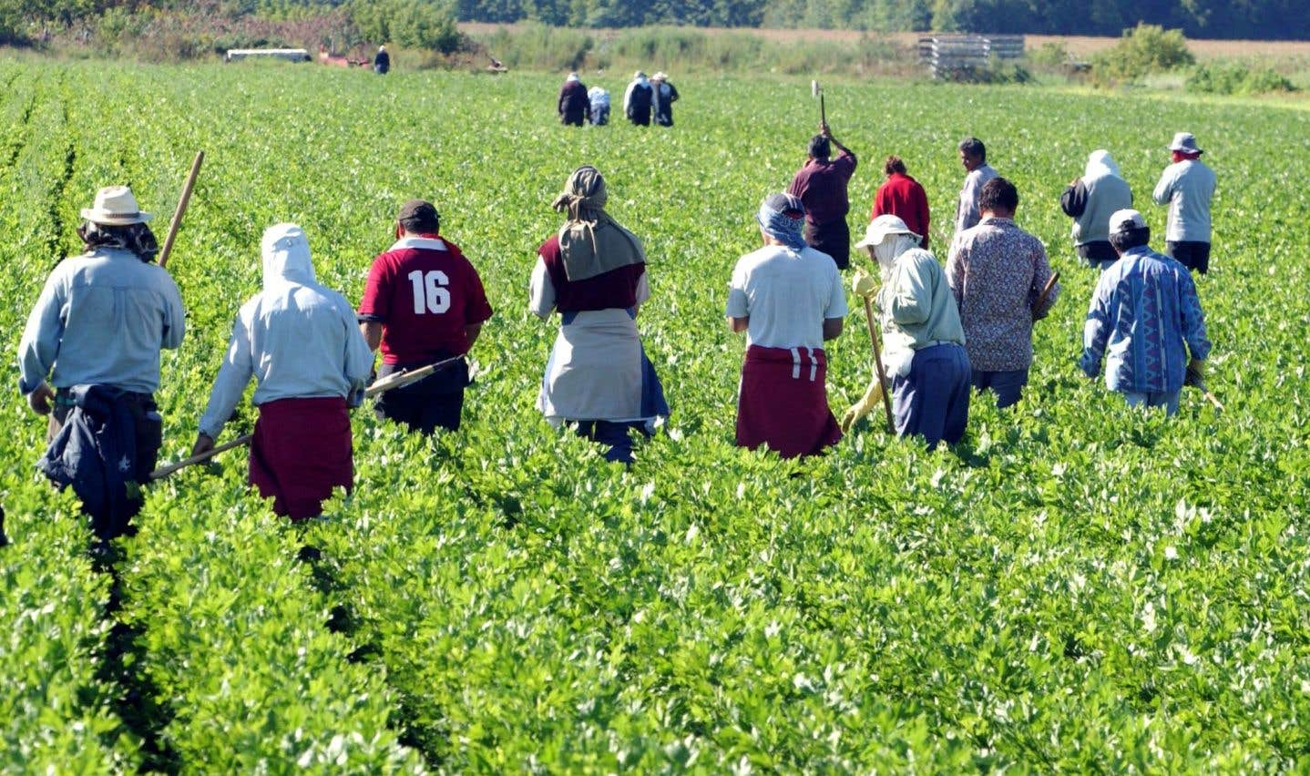 L'omertà de migrants sans filet