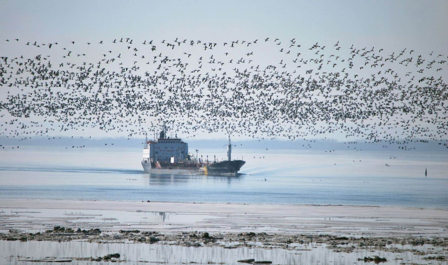 Le pilotage, un métier méconnu mais essentiel pour la sécurité du transport maritime sur le fleuve Saint-Laurent