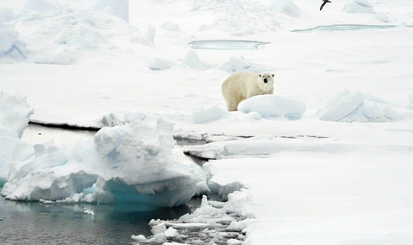Les radars surestiment de 11% l'épaisseur de la glace saisonnière pour la glace de plus de 95 centimètres d'épaisseur et de 25% pour la glace de moins de 70 centimètres d'épaisseur.