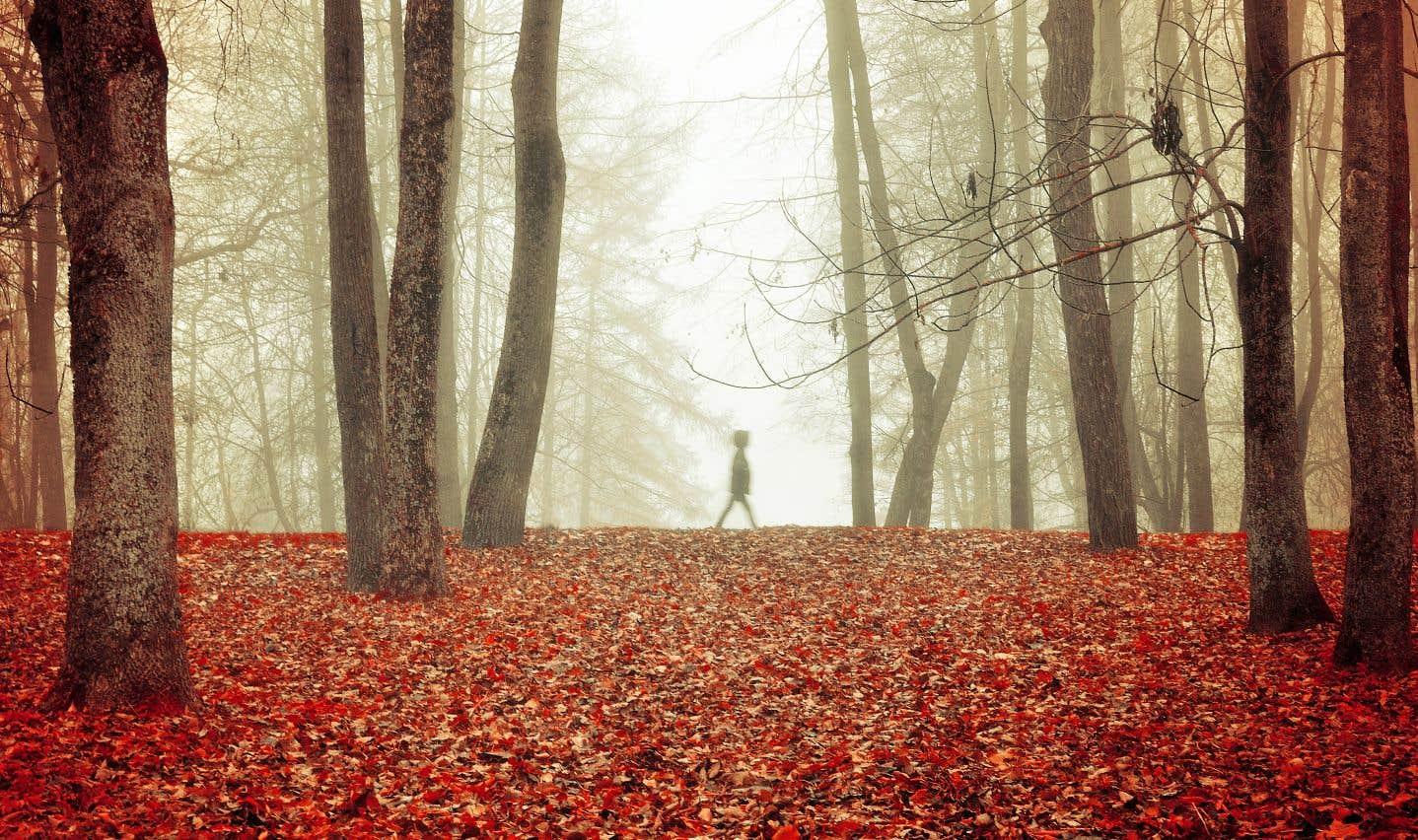À la rencontre de l'autre dans la forêt d'Hokkaido