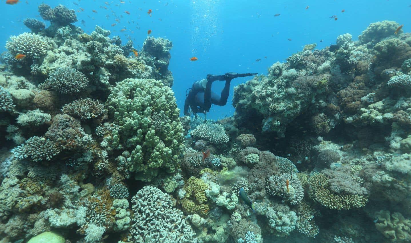 Des coraux dans la mer Rouge, au large d'Eilat, sur la côte israélienne, l'été dernier