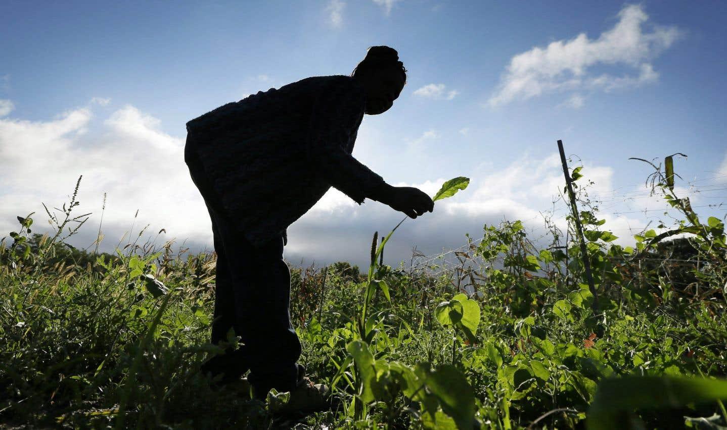 «En agriculture, comme en toute chose, tout choix est compromis», note l'auteur.