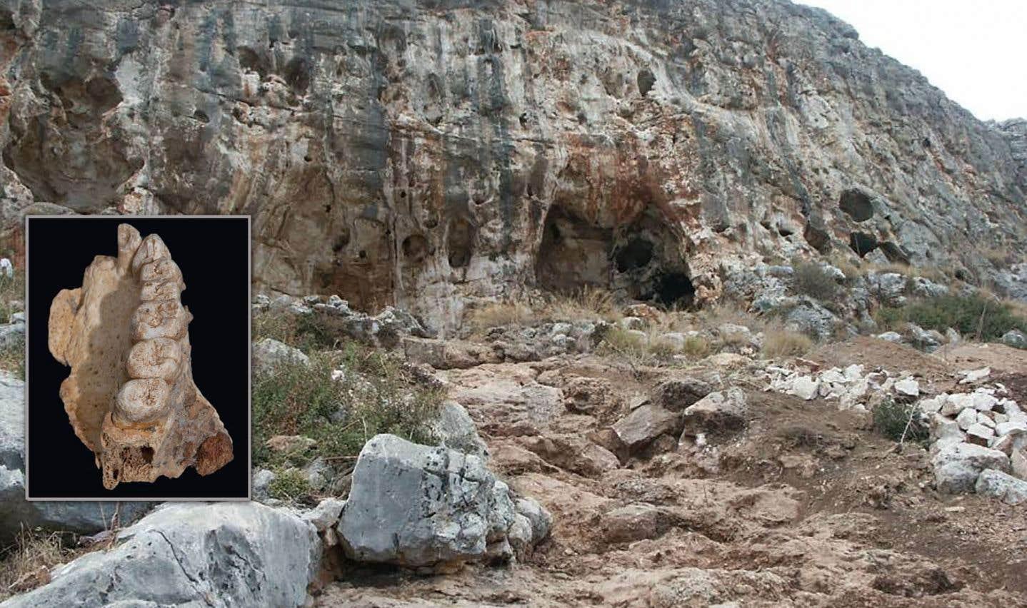 La découverte d'un fragment de mâchoire en Israël apporte un nouvel éclairage sur les croisements de l'homme avec d'autres espèces.