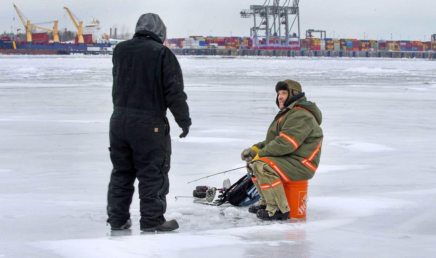 Espèces protégées: l'expansion du Port de Montréal pourrait être bloquée