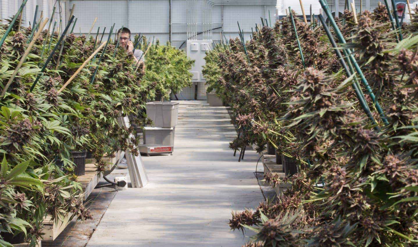 L'outaouaise Hydropothicaire fait partie des six sites actuels où des producteurs ont été autorisés par Santé Canada à cultiver du cannabis au Québec.