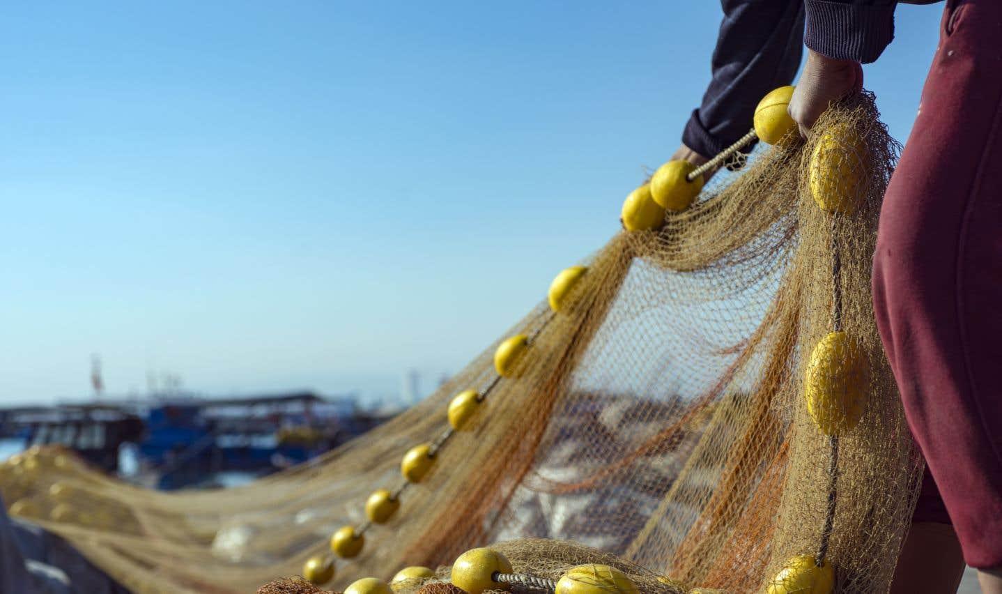 Le projet de loi C-68 déposé mardi à Ottawa restaure les protections de l'habitat pour tous les poissons.