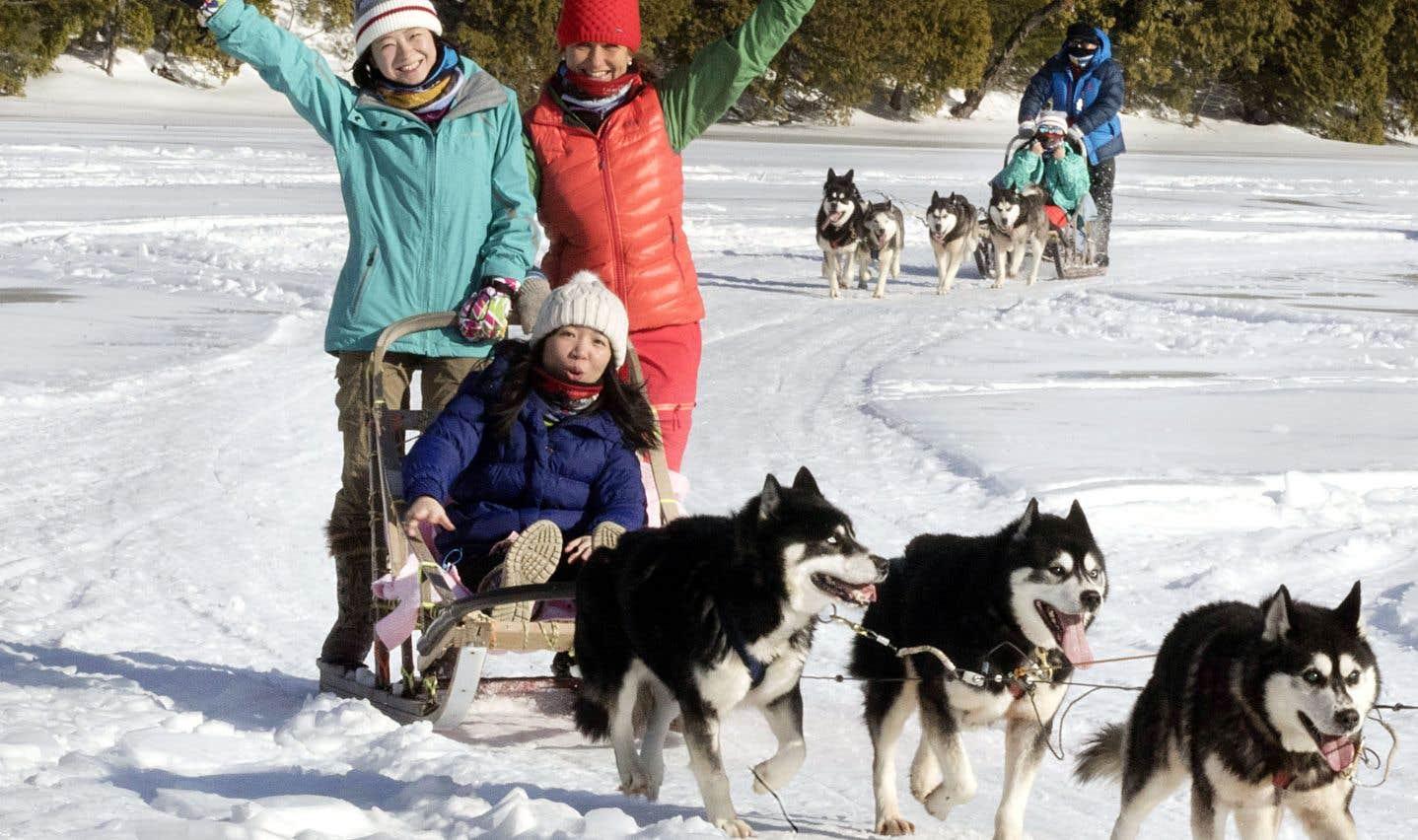 Les balades en traîneau à chiens sont le summum de l'exotisme pour bien des touristes chinois.
