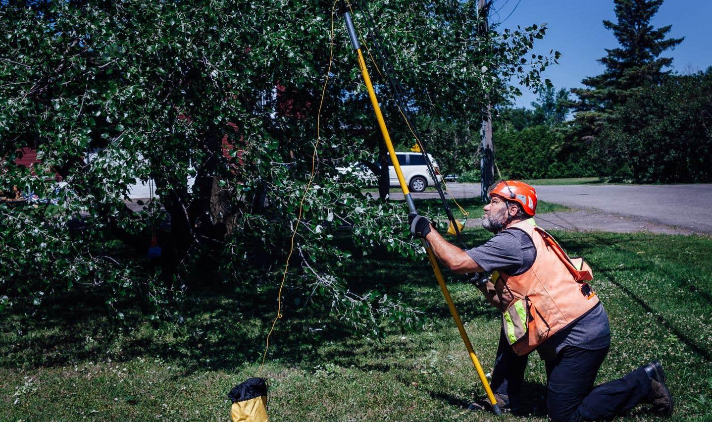 À l'aide d'un lance-pierre géant, le chercheur à l'INRS Claude Guertin propulse une corde au sommet des arbres.