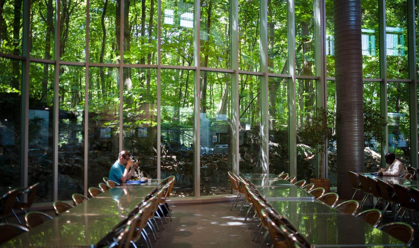 Les étudiants peuvent profiter d'un bain de lumière naturelle dans la cafétéria.