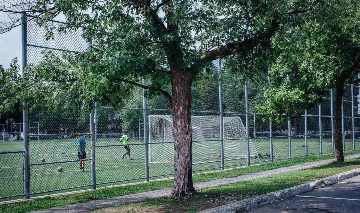 L'arbre qui sert de mémorial à Fredy Villanueva, juste à côté du parc Henri-Bourassa dans l'arrondissement Montréal-Nord. C'est là que le jeune de 18 ans est tombé sous les balles d'un policier, il y a dix ans, jour pour jour.