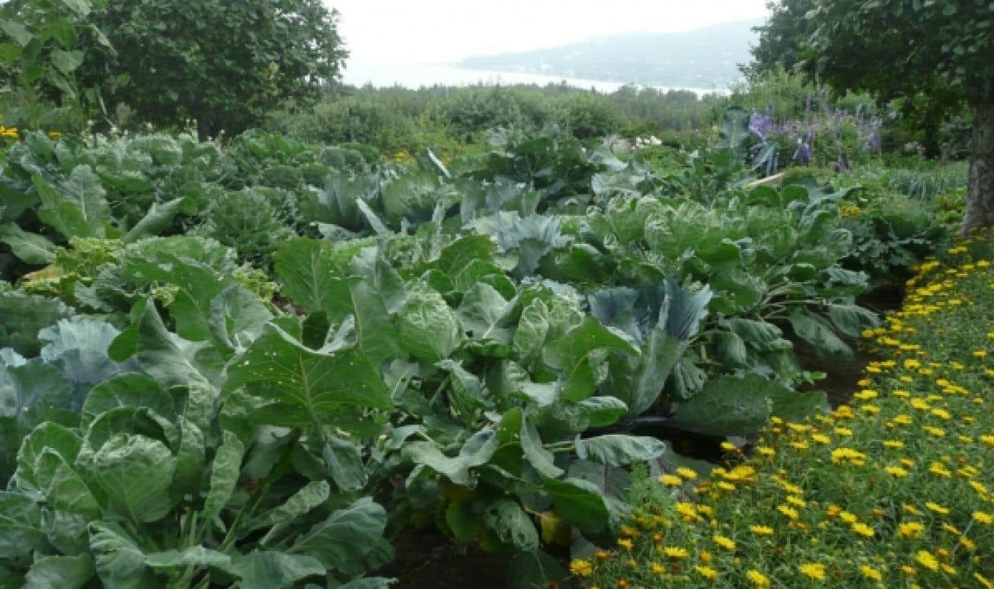L'essentiel en jardinage réside dans les amendements et la fertilisation raisonnée.