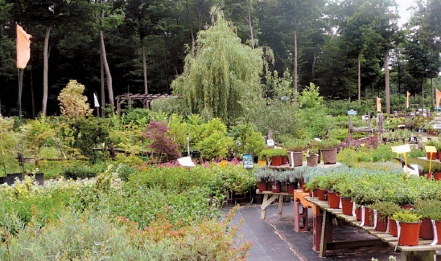 La Pépinière Villeneuve, à L'Assomption, offre une diversité de services et de plantes rarement égalée, dans un décor enchanteur.