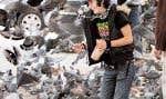 Le pigeon n'est pas l'oiseau le plus apprécié en ville. Mais on peut apprendre à l'aimer.