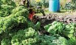 L'agriculture urbaine à Montréal est un phénomène d'une ampleur sous-estimée qui a le potentiel de devenir un projet stratégique et structurant. Déjà bien établi, le programme des jardins communautaires et des jardins collectifs doit être une priorité de son développement.
