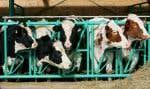 Au Québec, qui parle d'agriculture parle de produits laitiers, le premier secteur en nombre en termes de production.