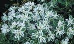 À quelques pas de distance peuvent se côtoyer des plantes de niche humide et des plantes de niche sèche. C'est au jardinier de créer des dénivellations et des changements de sol, d'utiliser des contenants, des toiles imperméables, des tas de ro
